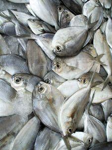 Free Fish At Market Royalty Free Stock Photography - 2595867