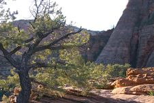 Free Single Tree In Zion Park Stock Photo - 2595990