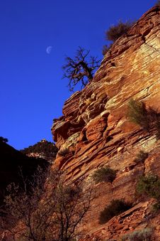 Lone Tree With Moon On Cliff Stock Photography