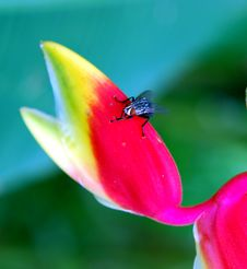 Free Fly On The Flower Royalty Free Stock Photo - 2596855