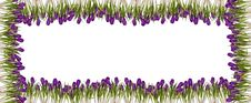 Free Spring Floral Frames Royalty Free Stock Image - 2597696