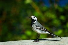 Free Small Bird Stock Image - 2597821