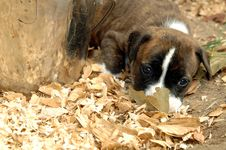Free Cute Puppy Outside Stock Photography - 2598532
