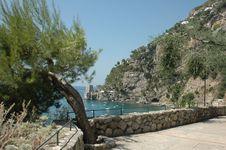Mediterranean Pine Royalty Free Stock Images