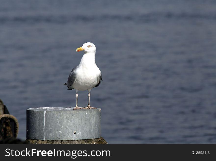 Seagull by seaside