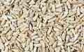 Free Sunflower Seeds Royalty Free Stock Image - 25905176