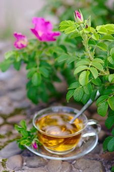Free Cup Of Tea With Canker-bloom Royalty Free Stock Photo - 25901195