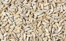 Free Sunflower Seeds Royalty Free Stock Image - 25905176