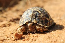 Free Armoured Shell - Tortoise Royalty Free Stock Images - 25906269