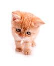 Free Red Kitten Is Looking Down Stock Images - 25914924