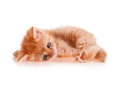 Free Red Kitten Lays Royalty Free Stock Photo - 25914925