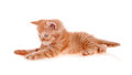 Free Red Kitten Lies And Looks Before Him Royalty Free Stock Image - 25914926