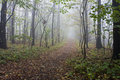 Free Forest With Fog Stock Image - 25915591
