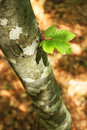 Free Lonesome Branch Stock Photo - 25918510