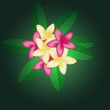 Free Frangipani Royalty Free Stock Images - 25913629