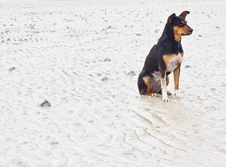 Free Dogs On The Beach Stock Photography - 25913932