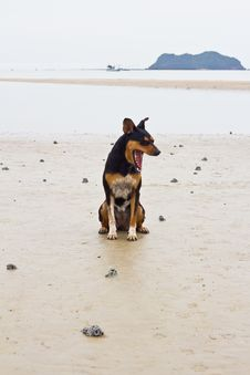 Free Dogs On The Beach Royalty Free Stock Image - 25913986