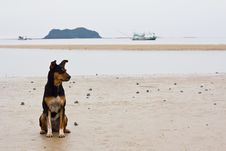 Free Dogs On The Beach Royalty Free Stock Image - 25914016