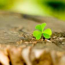 Free Clover On A Wood Royalty Free Stock Images - 25914679