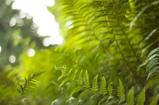 Free Sunshine Through Curling New Bracken Stock Images - 25916004