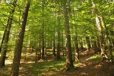 Free Green Forest In The Summer Stock Images - 25918204