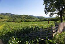Free Hillside Rural Landscape Stock Photography - 25919352