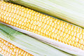 Free Fresh Corn Stock Photos - 25927273