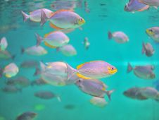 Free Fish In Aquarium. Royalty Free Stock Images - 25923009