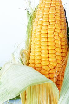 Free Fresh Corn Stock Photo - 25927200
