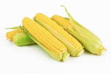 Free Fresh Corn Royalty Free Stock Photography - 25927287