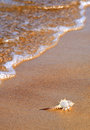 Free Seashell On The Sea Coast Royalty Free Stock Image - 25934136