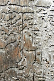 The Texture Of The Wood Stock Photography