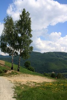 Free The Two Birch Trees In The Mountains Stock Image - 25933011
