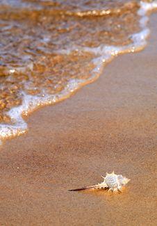 Seashell On The Sea Coast Royalty Free Stock Image