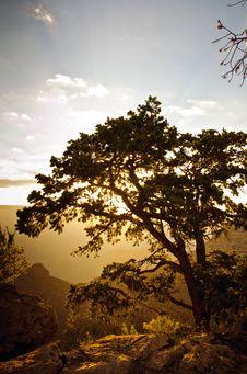Free Grand Canyon Sunrise Behind Tree Royalty Free Stock Image - 25937386