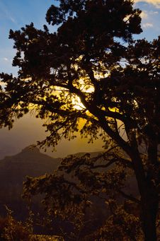 Free Grand Canyon Sunrise Behind Tree Royalty Free Stock Photography - 25937417