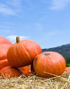 Free Pumpkins  In Farm Royalty Free Stock Image - 25939716