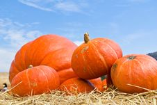 Free Pumpkins In Farm Stock Photography - 25939732