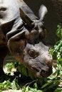 Free Rhinoceros Royalty Free Stock Photos - 25941178
