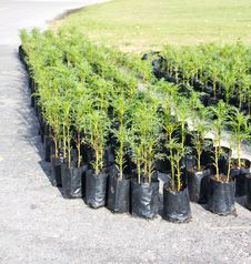 Young Plants In Planting Bags Royalty Free Stock Image