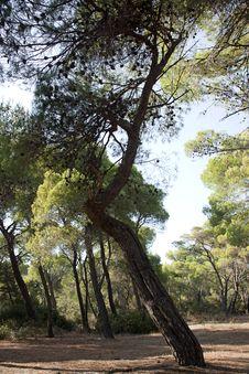 Free Tree Stock Image - 25942171