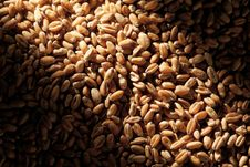 Free Grains Of Wheat Royalty Free Stock Photo - 25947005
