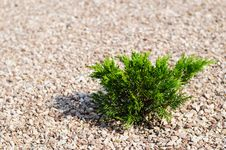 Gravel And Bush Royalty Free Stock Images