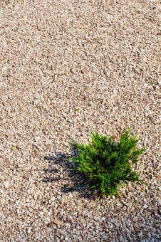Gravel And Bush Stock Photo