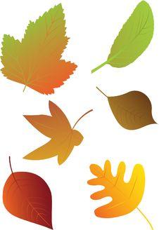 Free Autumn Leaves. Royalty Free Stock Photos - 25949858