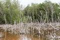 Free Dead Tree Landscape In Late Sun Stock Image - 25950921