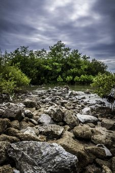 Free Mangrove Forest In Blue Sky Stock Photos - 25953473