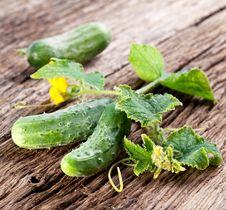 Free Cucumbers With Leaves Stock Photos - 25959993