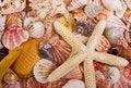 Free Sea Shells And Starfish Stock Photos - 25967913