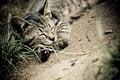 Free Tabby Cat Royalty Free Stock Photography - 25968457